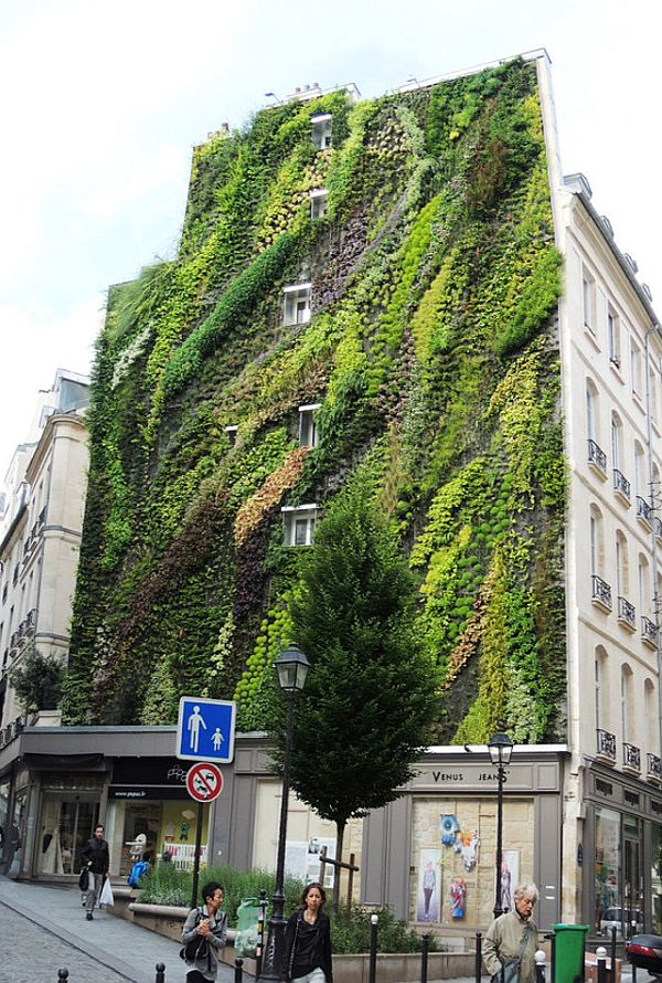 Oasis of Aboukir Vertical Garden by Patrick Blanc