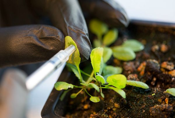 mit researchers bionic plants