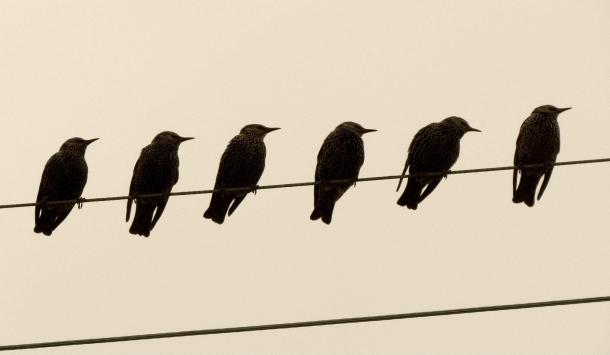 urban wildlife photography6