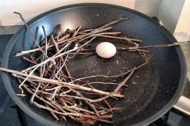 Pigeon-egg in fying pan