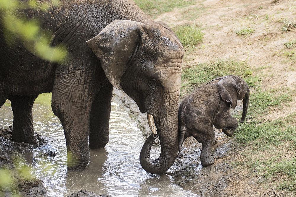 best elephants photographs  13