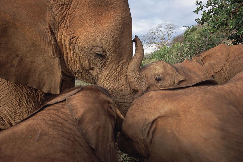 best elephants photographs  2