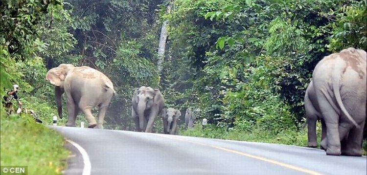 angry elephant attack 4