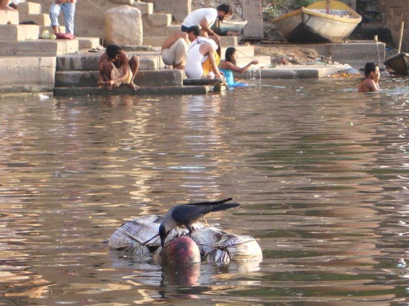 floting bodies in ganges