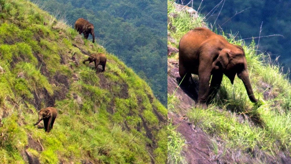 Elephants climbing mountain 2