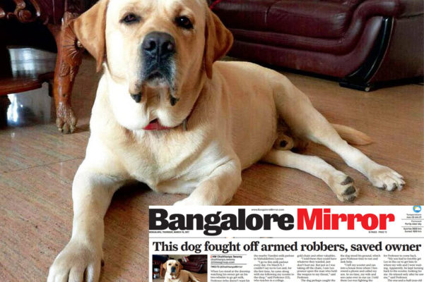 bangalore dog fights armed robbers to save his master