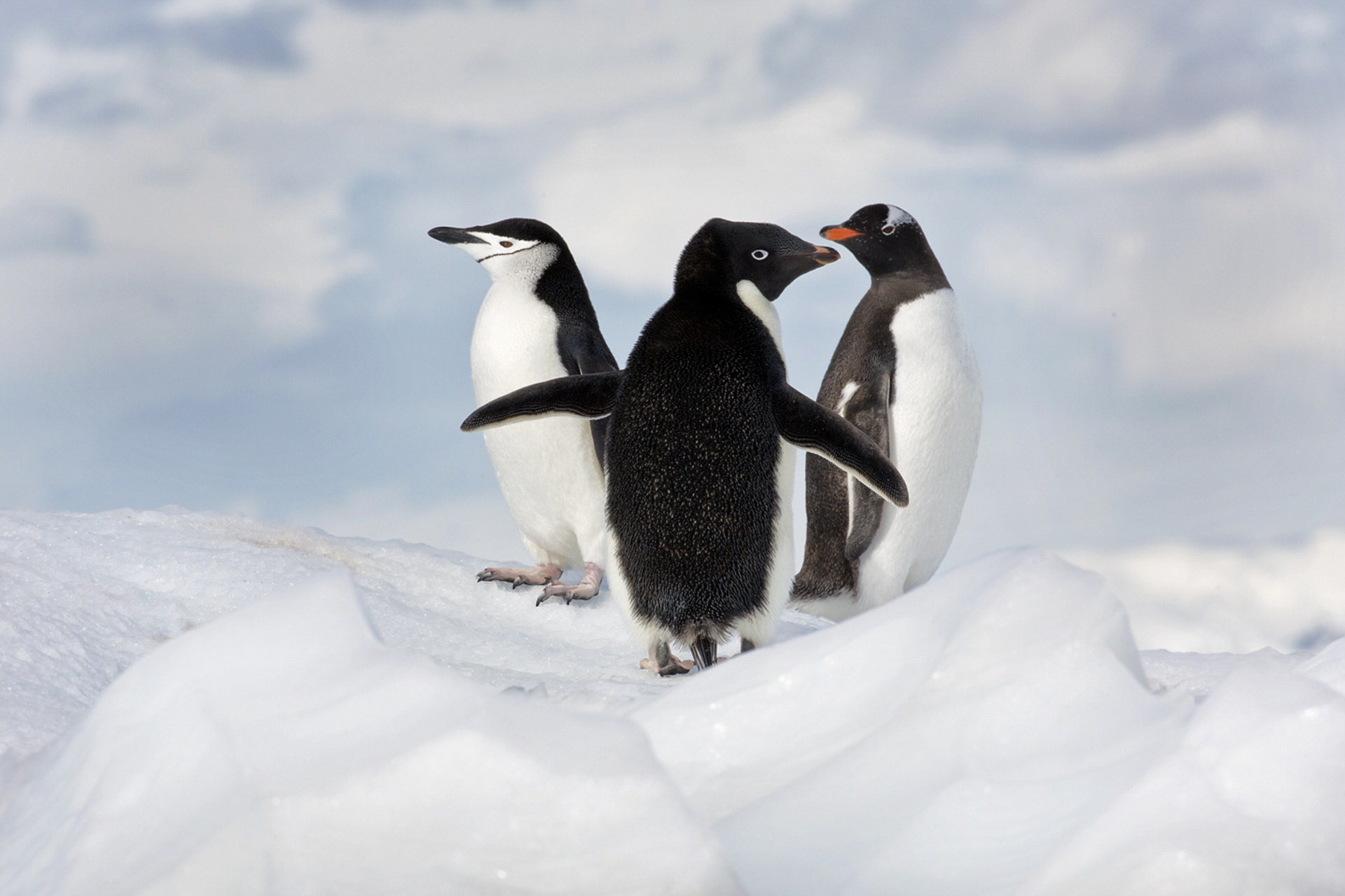 photographer ira meyer antarctica photo collection 9