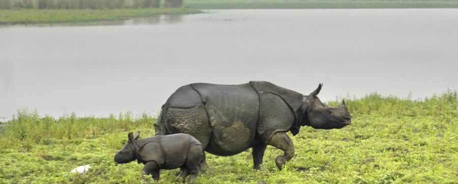 Longest Flyover of India to be built in Kaziranga National Park to Protect Animlas from Vehicle Hits