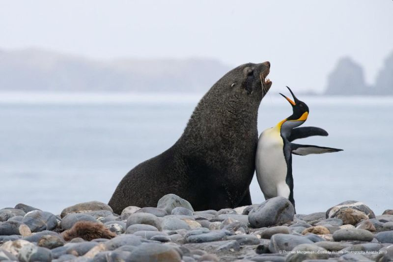 Top 40 finalists of The Comedy Wildlife Photography Awards Would Make You Laugh Out Loud