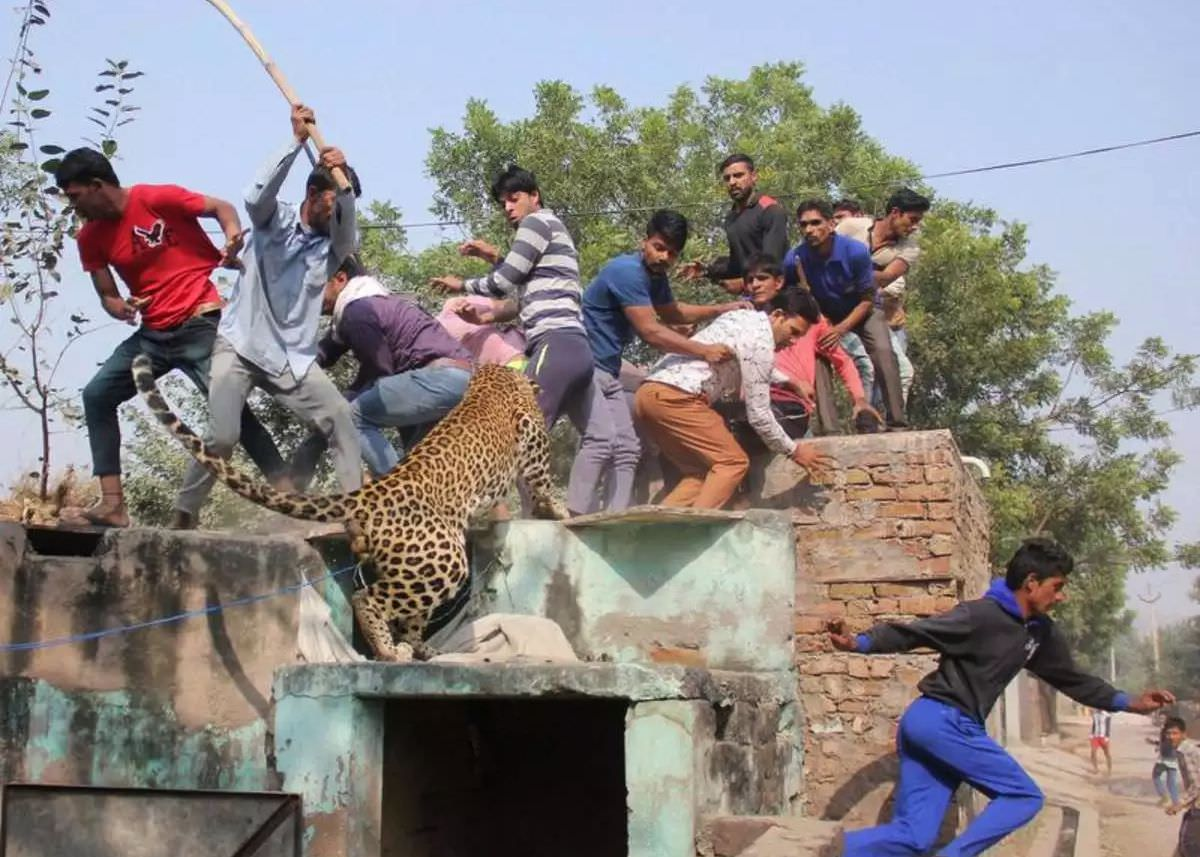 Human-Wildlife Conflicts in India: Can We All Coexist?