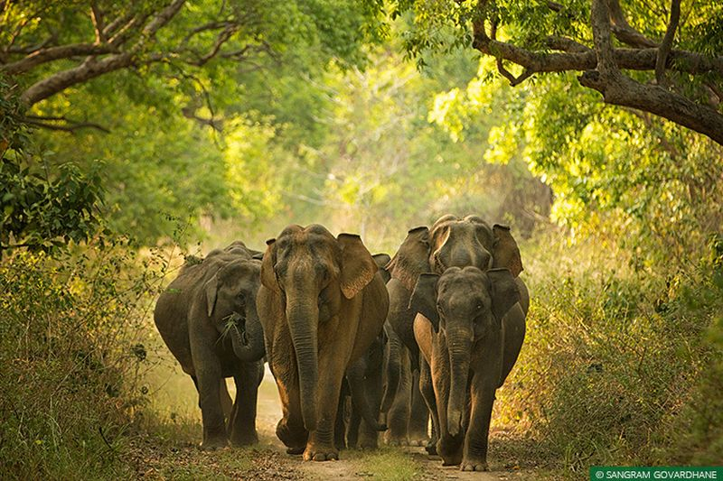 New Standard Operating Procedure to Deal with Anthrax Deaths in Elephants in India