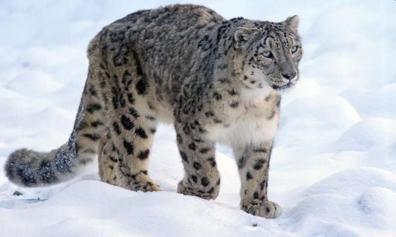 India's First Snow Leopard Conservation Center to be constructed at Gangotri National Park