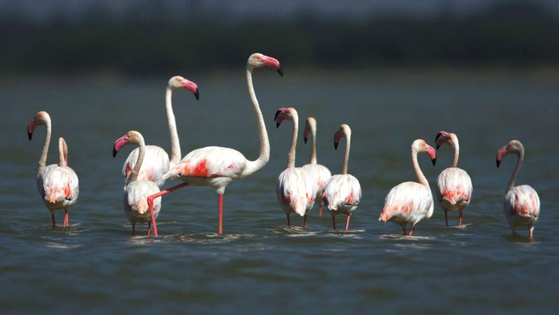 UN Summit on Conservation of Migratory Species will thrive on Ecological Connectivity