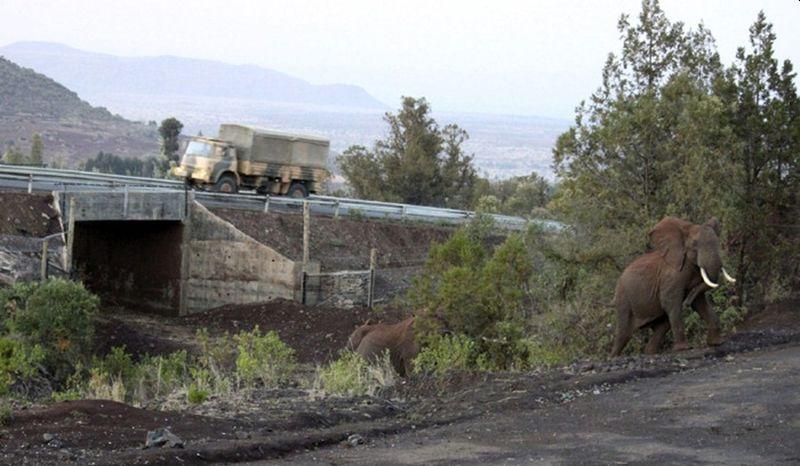 Elephant underpass in Mt. Kenya National Forest - Wildlife Corridors across the Globe
