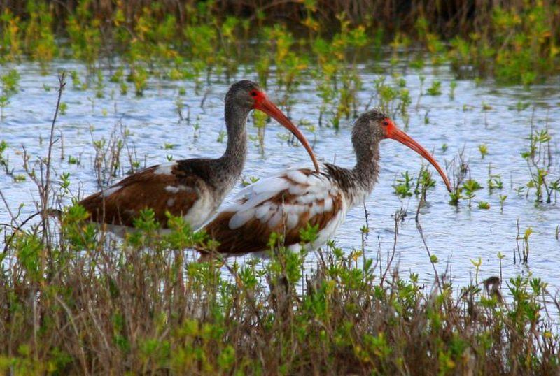 Lower Rio Grande Valley - Wildlife Corridors across the Globe