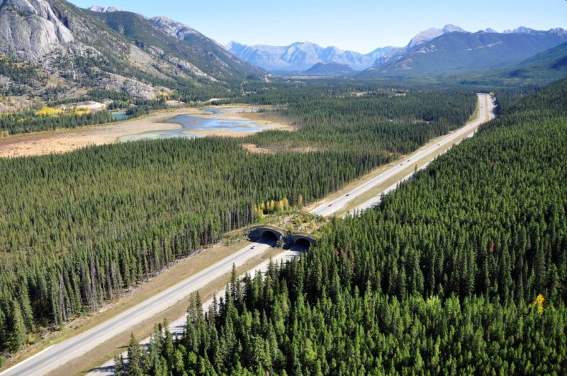 TransCanada Highway in Banff National Park, Canada - Wildlife Corridors around the world