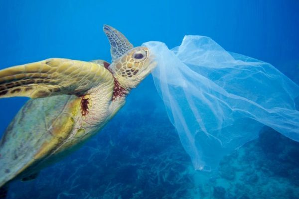 Researchers Reveal Odor of Ocean Plastics Causes Turtles to Eat Them