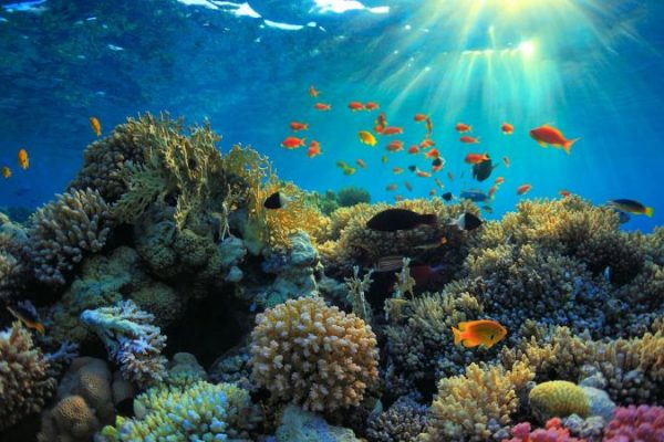 Scientific Methods to Rebuild Marine Life Amid Rising Temperatures