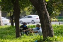 Coronavirus Put thousands Out of Work in Pakistan, Government Hires Them to Plant Trees
