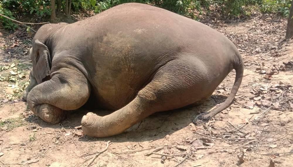 Elephants found dead in Chattisgarh