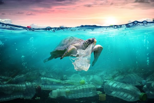 Ocean Plastic Is Expected to Triple Within Two Decades
