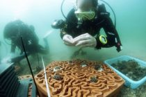 3D-Printed Terracotta Tiles to Restore Growth of Coral Reefs