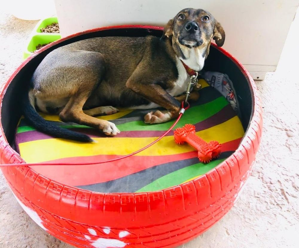Creative Couple Upcycles Discarded Tires into Adorable Pet Beds
