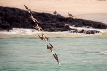 Galapagos Photography Competition 2020 Brings Stunning Photos of Wildlife