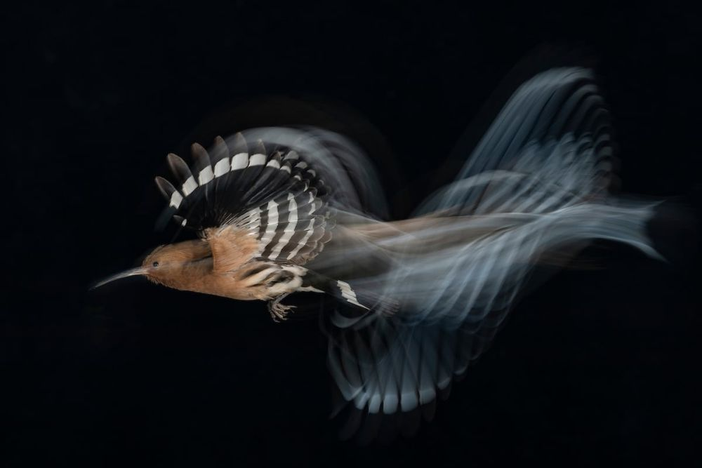Bird Photographer of the Year Brings Mesmerizing Pictures of Avian Species