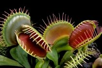 Marvelous Carnivorous Plants are Threatened by Imminent Extinction