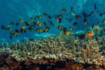Ecosystems in Peril as World Fails to Meet Biodiversity Targets, UN Report