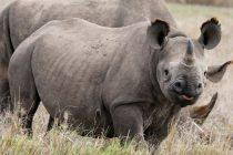 FIT to Protect Black Rhinos in Namibia