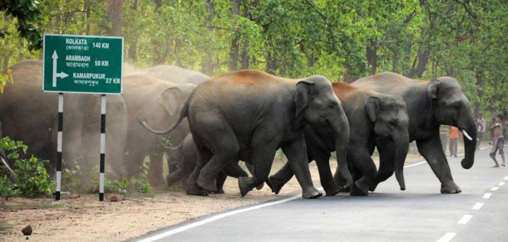 West Bengal Becomes Human-Elephant Conflict Zone Amid Receding Forest Cover