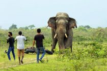Asian Elephant Populations decline in India despite Various Conservation Efforts