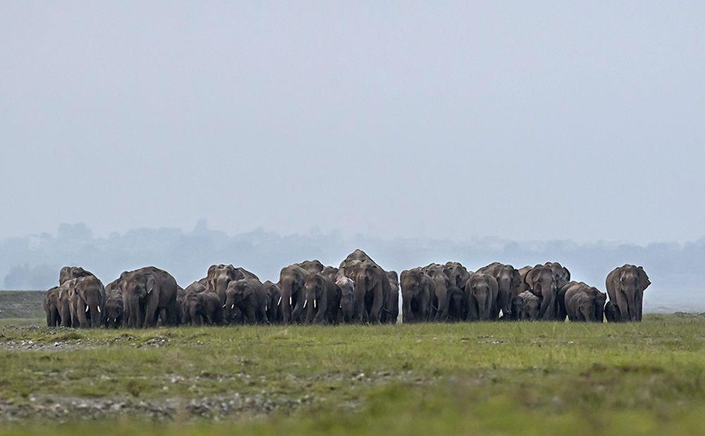 Electrocution of Elephants in Sri Lanka Highlights Threat to Animals