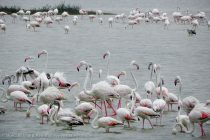 Migratory Birds Swarm Wildlife Sanctuaries of Tamil Nadu