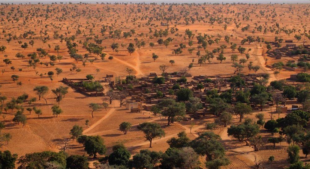Major Population of Wild Tree Species at Worldwide Risk of Extinction