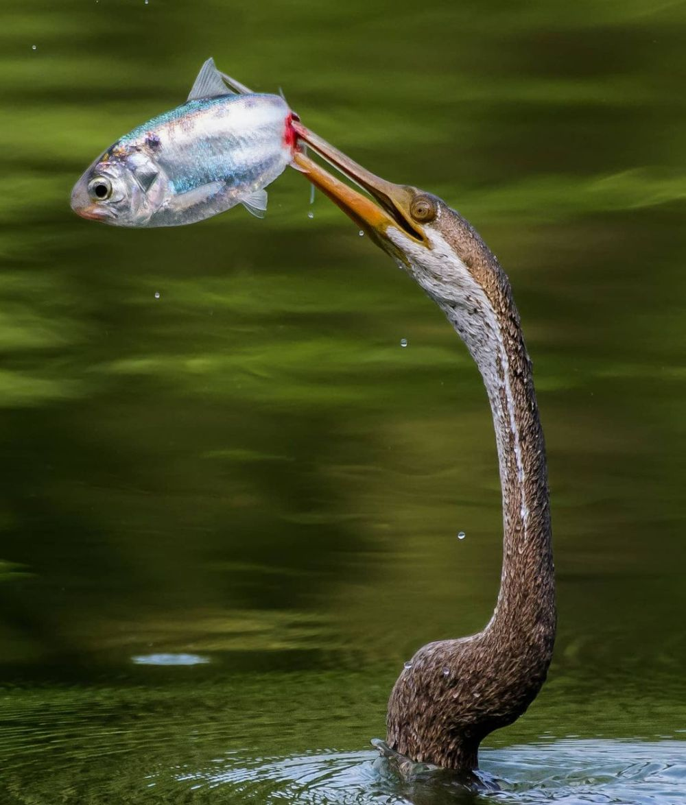 Nature on Hunt: These Wildlife Photographs Depict the Vicious Circle of Life