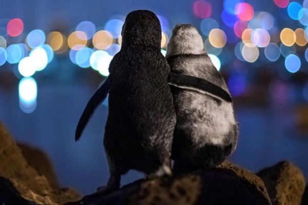 Award-Winning Photograph of Two Widowed Penguins Comforting Each Other Wins Hearts