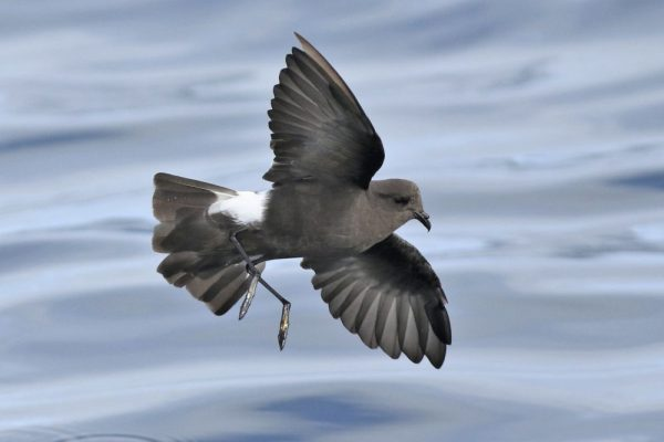 Bird Feces and Lake Mud Time Machine Shows Staggering Decline in Seabird Populace