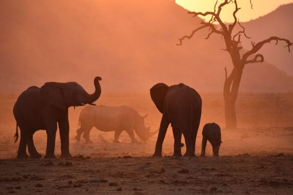 Big Five of the Jungle: A Photographic Journal of These Majestic African Animals