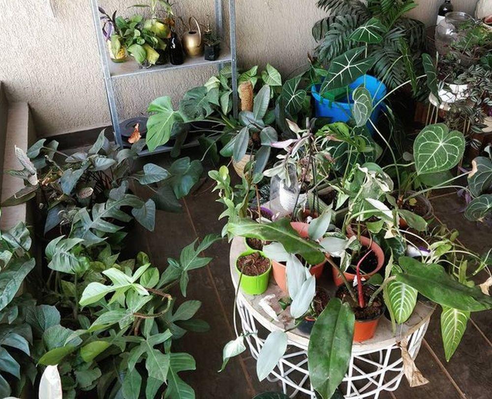 Manmayee's Urban Garden
