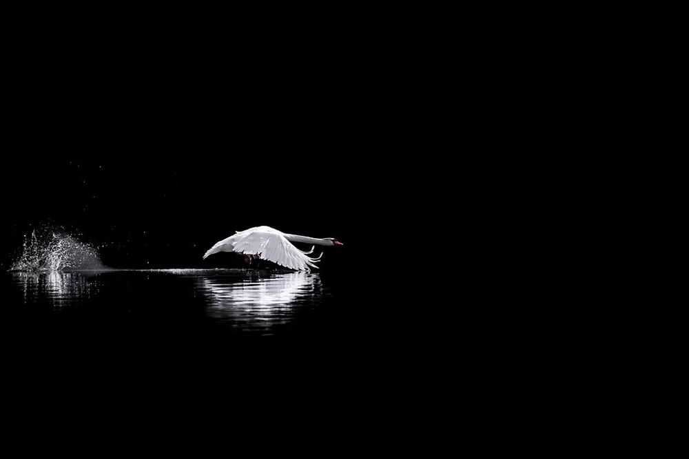 """Best Wildlife Photographs of 2020 -""""Into the darkness"""" by Alan Gallo"""