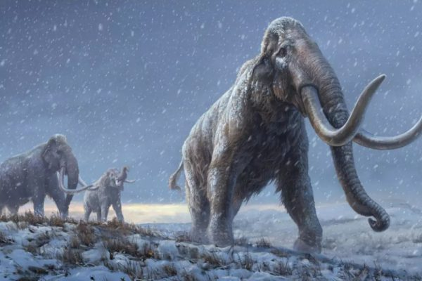 World's Oldest DNA Extracted from Million Year Old Mammoth