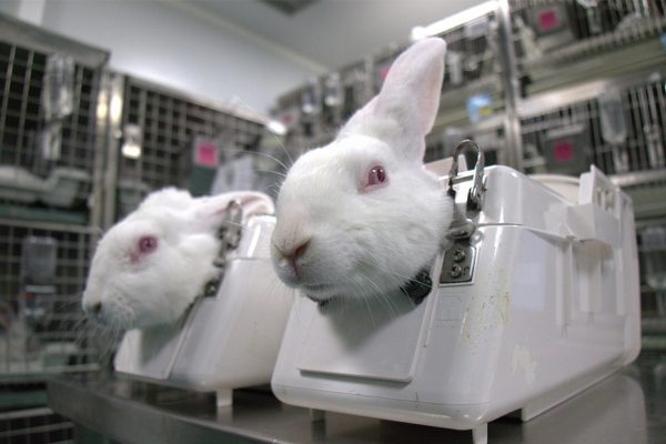 Animal Cruelty Footage Leads to Ban in Animal Testing in a Spanish Lab