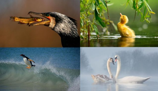 Finalists of the Bird Photographer of the Year 2021