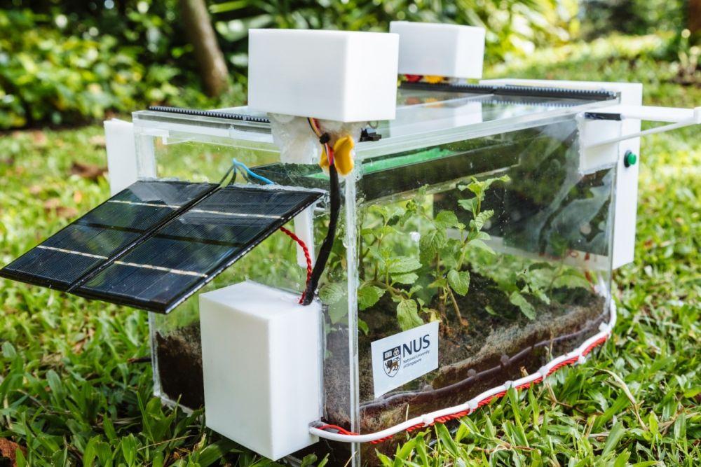 NUS SmartFarm Harvests Water from Air to Grow Plants Using Hydrogel