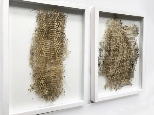 diana scherer's intricately patterned roots could be a carbon capturing eco-material