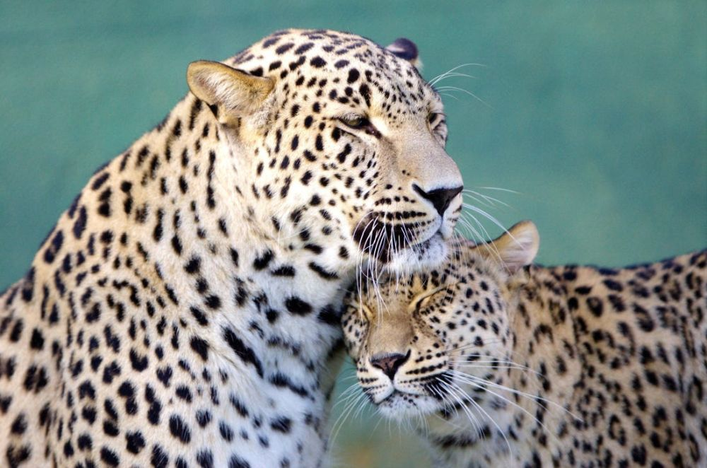 Beautiful Pictures of Animals in Love