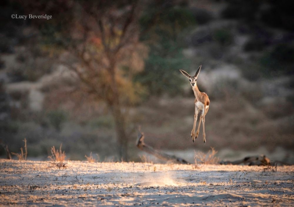 Early Entries from Comedy Wildlife Photography Awards 2021 are Absolutely Hilarious